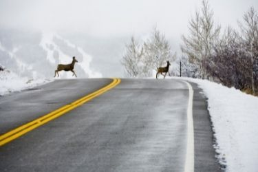 Two deer crossing the road on a snowy day with mountains in the background