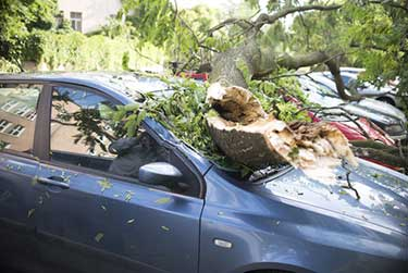 Fallen tree damge and car insurance