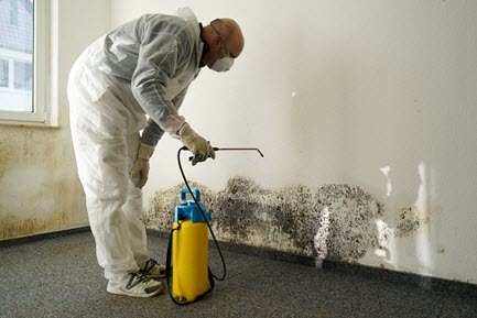 Mold damage in house and insurance