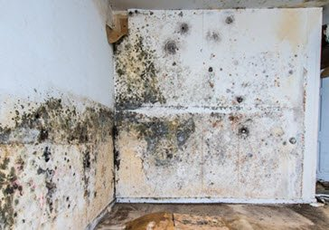 Mold Damage In House Symptoms Cleanup Amp Removal Insurance