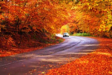Top 15 Ontario Fall Driving Tips